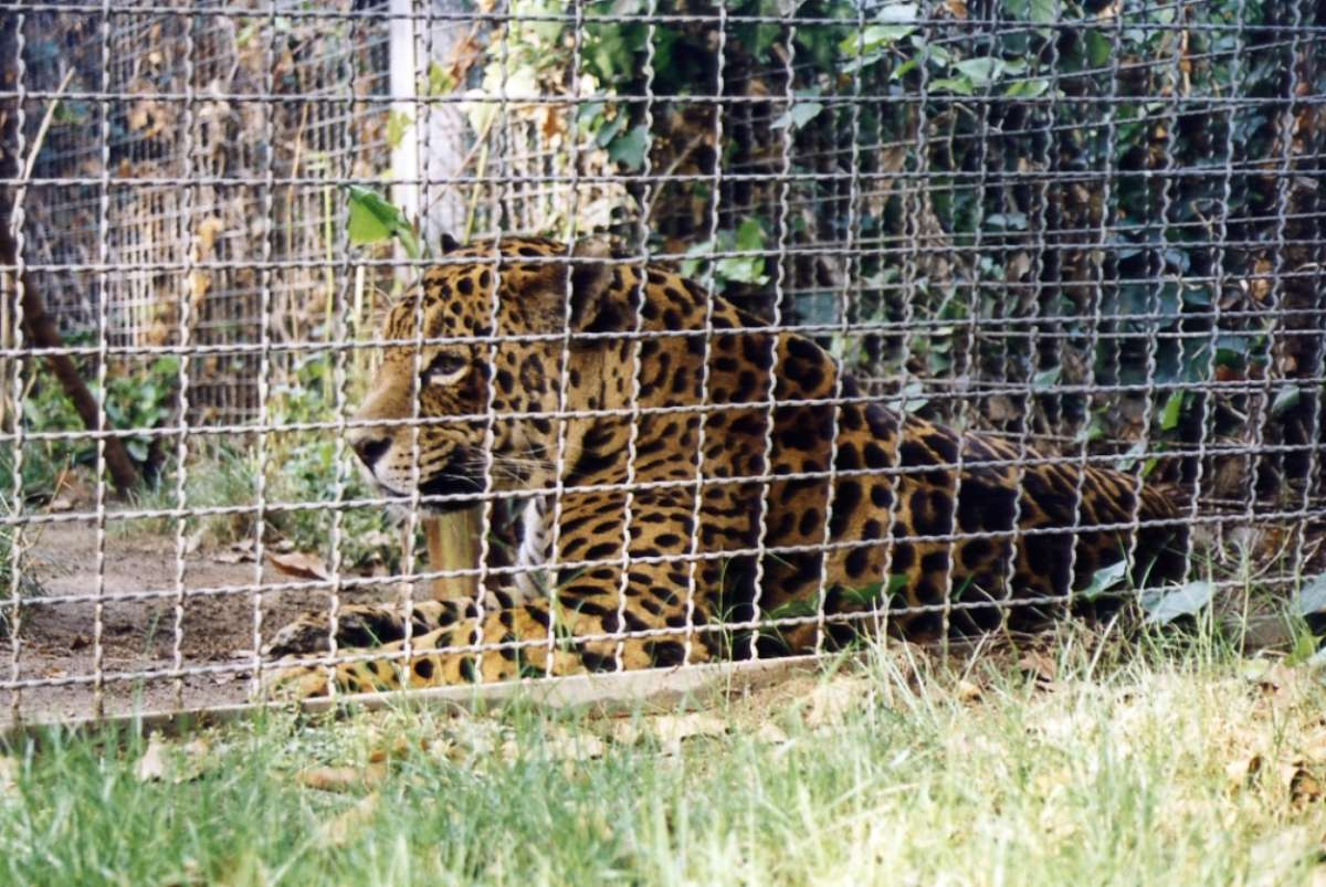 Zoos: a selection of sites