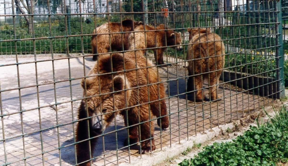 Adda Ong: Zoos are like prisons